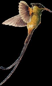 Hummingbird Download PNG Image PNG Clip art
