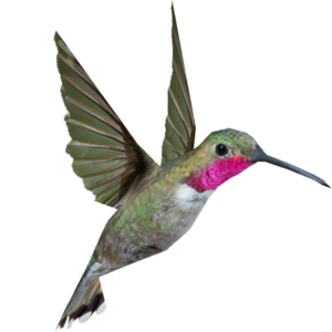Hummingbird PNG Background Image PNG Clip art
