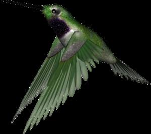 Hummingbird PNG Clipart PNG Clip art