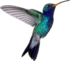 Hummingbird PNG File PNG icon