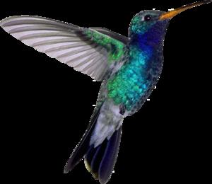 Hummingbird PNG File PNG Clip art