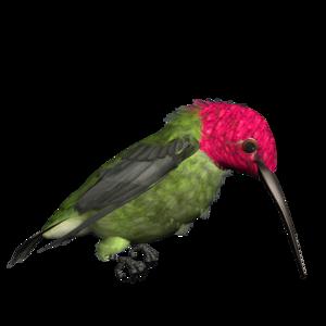 Hummingbird PNG Free Download PNG Clip art