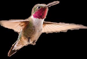 Hummingbird PNG Image PNG Clip art