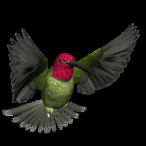 Hummingbird PNG Pic PNG Clip art