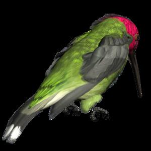 Hummingbird PNG Picture PNG Clip art