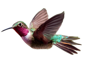 Hummingbird PNG Transparent HD Photo PNG icon