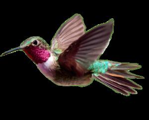 Hummingbird PNG Transparent HD Photo PNG Clip art