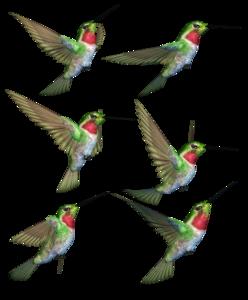 Hummingbird PNG Transparent Image PNG Clip art