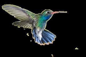 Hummingbird PNG Transparent Picture PNG Clip art