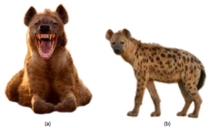 Hyena PNG Free Download PNG Clip art
