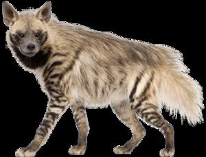 Hyena PNG Image PNG Clip art