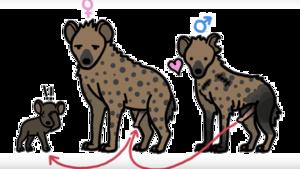 Hyena PNG Pic PNG Clip art