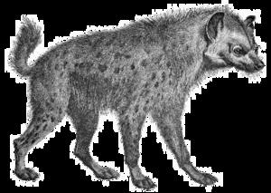 Hyena PNG Transparent Image PNG Clip art