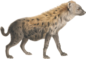 Hyena Transparent PNG PNG Clip art