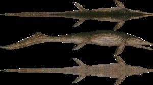 Ichthyosaur Transparent PNG PNG Clip art