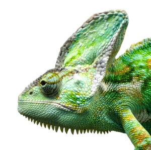 Iguana PNG Free Download PNG Clip art