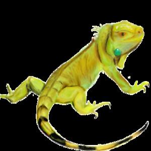 Iguana PNG HD PNG Clip art