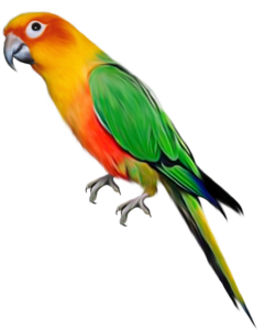 Indian Parrot PNG File PNG Clip art