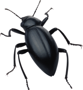 Insect PNG Clipart PNG Clip art