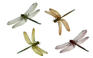 Insect PNG Image PNG Clip art