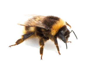 Insect PNG Pic PNG Clip art