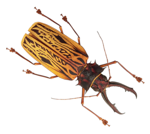 Insect PNG Picture PNG Clip art