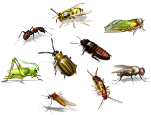 Insect PNG Transparent Picture PNG Clip art