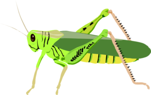 Insect Transparent Background PNG Clip art