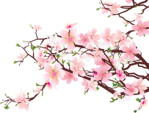 Japanese Flowering Cherry PNG Clipart PNG Clip art