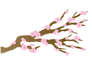 Japanese Flowering Cherry PNG HD PNG Clip art
