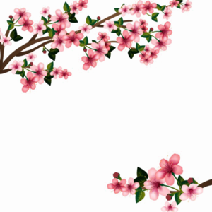 Japanese Flowering Cherry PNG Transparent Image PNG Clip art