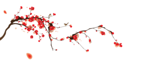 Japanese Flowering Cherry Transparent Images PNG PNG Clip art