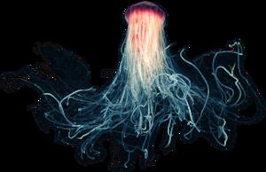Jellyfish PNG File PNG Clip art