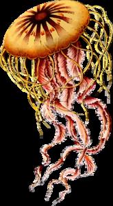Jellyfish PNG Photos PNG Clip art
