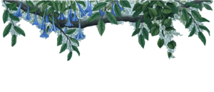Jungle Border PNG File PNG Clip art