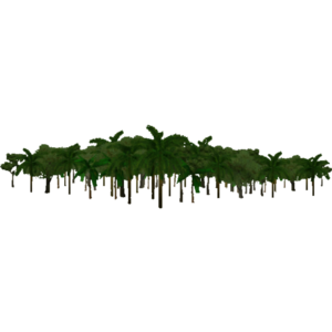 Jungle Transparent Background PNG Clip art