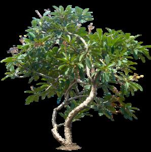 Jungle Tree PNG File PNG Clip art