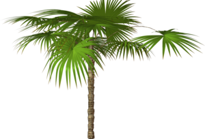 Jungle Tree PNG Free Download PNG Clip art
