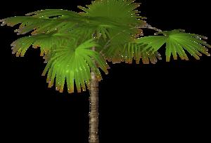 Jungle Tree PNG Free Download PNG Clip art