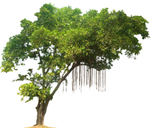 Jungle Tree PNG Image PNG Clip art