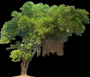 Jungle Tree PNG Image PNG Clip art