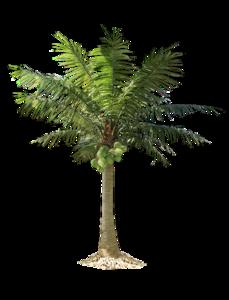 Jungle Tree PNG Pic PNG Clip art