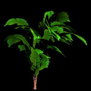 Jungle Tree PNG Transparent Image PNG Clip art