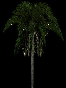Jungle Tree Transparent Background PNG Clip art