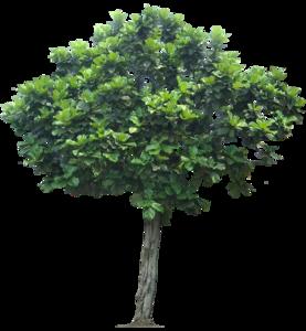 Jungle Tree Transparent PNG PNG Clip art