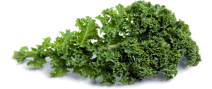 Kale PNG Picture PNG image