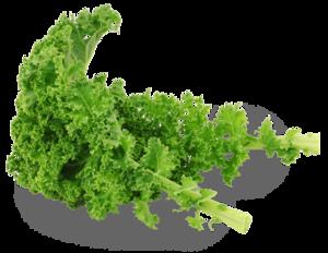 Kale Transparent Background PNG Clip art
