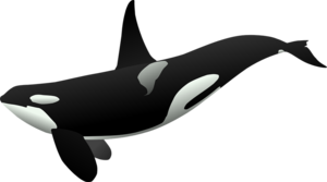 Killer Whale Background PNG PNG Clip art