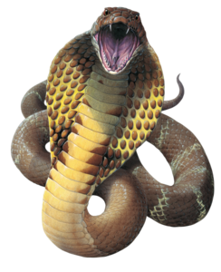 King Cobra PNG File PNG Clip art