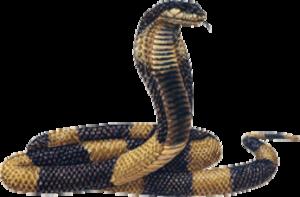 King Cobra PNG Transparent Image PNG Clip art
